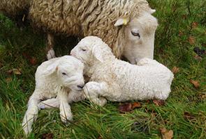 защита на животните